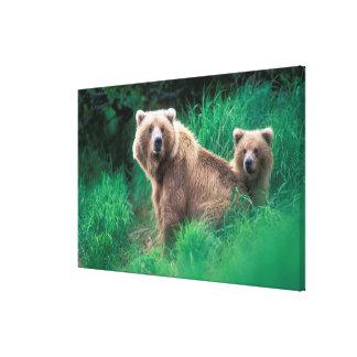 USA, Alaska, Katmai National Park, Grizzly 3 Gallery Wrapped Canvas