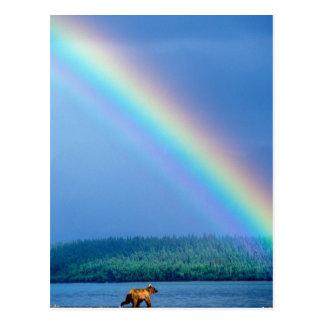 USA, Alaska, Katmai National Park, Grizzly Postcard