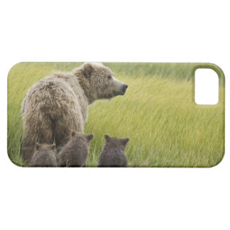 USA, Alaska, Lake Clark National Park. Grizzly iPhone 5 Covers