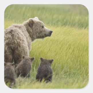 USA, Alaska, Lake Clark National Park. Grizzly Square Sticker