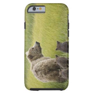 USA, Alaska, Lake Clark National Park. Grizzly Tough iPhone 6 Case