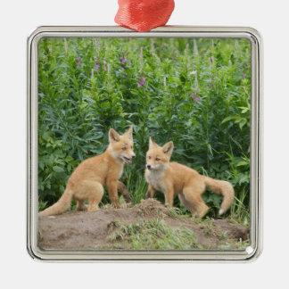 USA, Alaska, McNeil River. Red Fox. 2 Silver-Colored Square Decoration