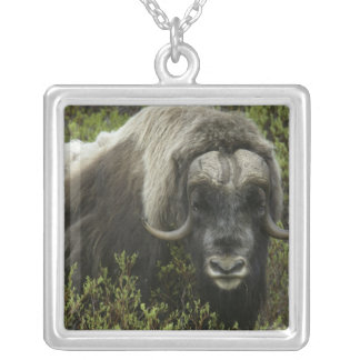 USA, Alaska, Nome. Close-up of musk ox Square Pendant Necklace