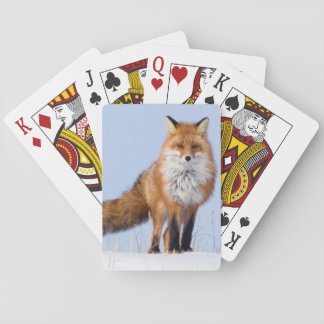 USA, Alaska, North Slope, 1002 Area Poker Deck