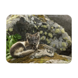 USA, Alaska, Pribilof Islands, St Paul. Blue Rectangular Photo Magnet