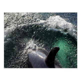 USA, Alaska, Tenakee Springs. Orca Postcard
