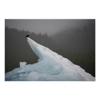 USA, Alaska, Tongass National Forest, Bald Poster