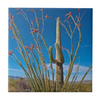 USA, Arizona. Cactus In Saguaro National Park Ceramic Tile