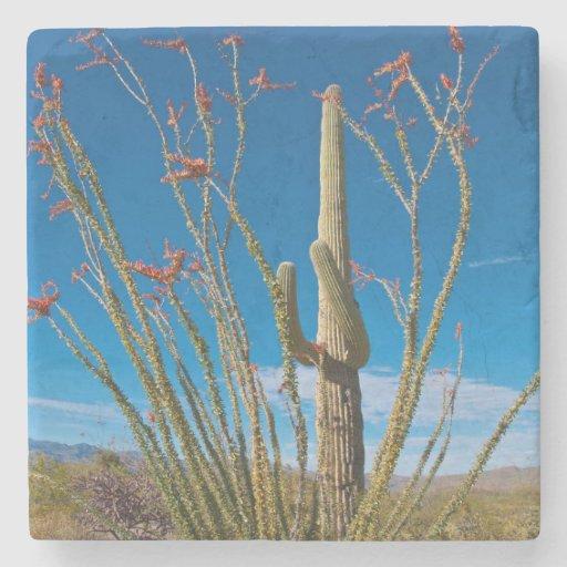 USA, Arizona. Cactus In Saguaro National Park Stone Beverage Coaster