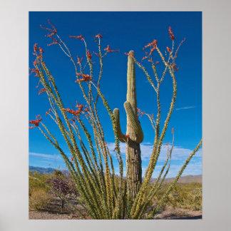 USA, Arizona. Cactus In Saguaro National Park Poster