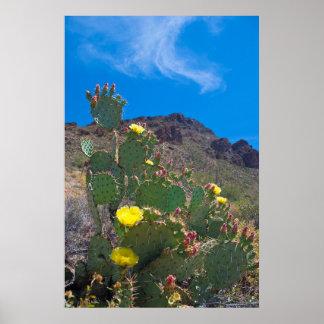 USA, Arizona. Cactus In The Hills Poster