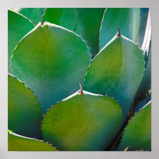 USA, Arizona. Close-Up Of Succulent Plant Posters