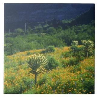 USA, Arizona, Organ Pipe Cactus National Large Square Tile