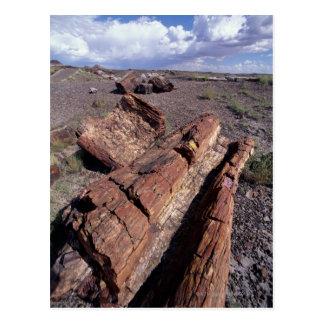 USA, Arizona, Petrified Forest National Park, 2 Postcard