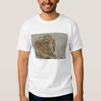 USA, Arizona, Phoenix. One of pair of burrowing Tshirts