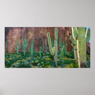 USA, Arizona. Saguaro Cactus Field By A Cliff Poster