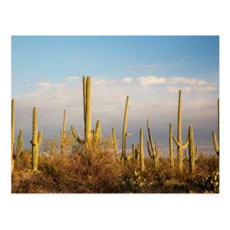 USA, Arizona, Saguaro National Park, Saguaro Postcard