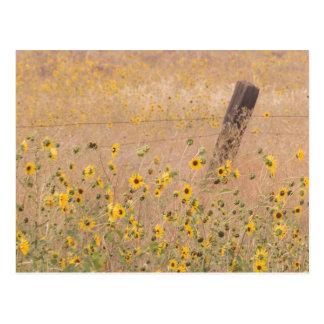 USA, California, Adin. Barbed-Wire Fence Postcard