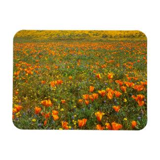 USA, California, Antelope Valley California Rectangular Photo Magnet