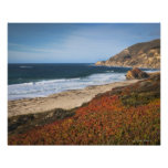 USA, California, Big Sur, Red plants by beach Posters