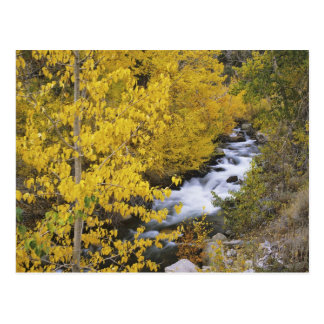 USA, California. Bishop Creek and aspen trees in Postcard