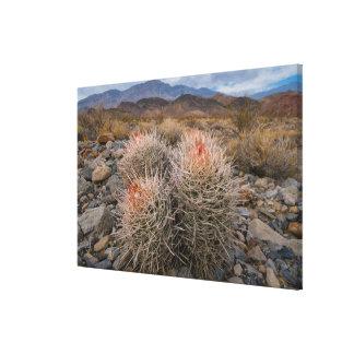 USA, California, Cactus in desert Canvas Print