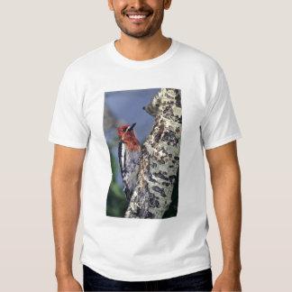 USA, California, Eastern Sierras, Lee Vining. T-shirt