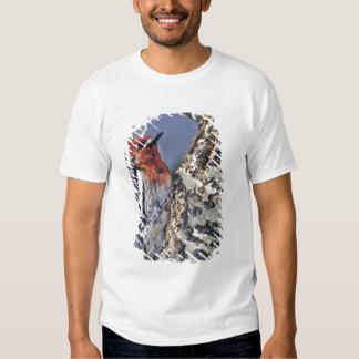 USA, California, Eastern Sierras, Lee Vining. Tshirts