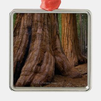 USA, California, Giant Sequoia tree Metal Ornament
