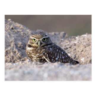 USA - California - Imperial County - Salton Sea Postcard