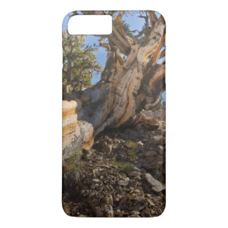 USA, California, Inyo National Forest 12 iPhone 7 Plus Case