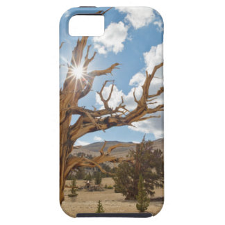 USA California Inyo National Forest 6 iPhone 5 Case