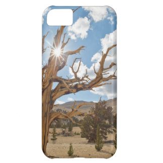 USA, California, Inyo National Forest 6 iPhone 5C Case