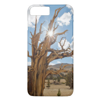 USA, California, Inyo National Forest 6 iPhone 7 Plus Case