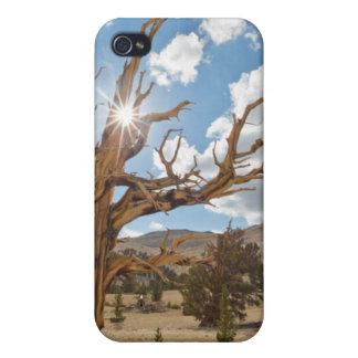 USA California Inyo National Forest 6 iPhone 4/4S Case