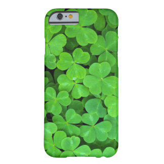 USA, California, Jedediah Smith Rewood SP. Barely There iPhone 6 Case