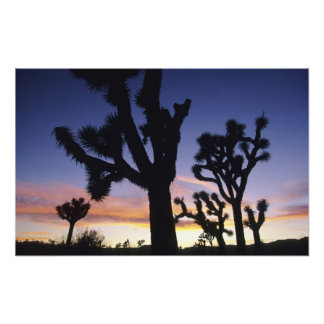 USA, California, Joshua Tree National Park, Photographic Print