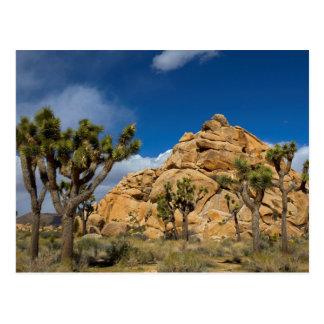 USA, California, Joshua Tree National Park Postcard