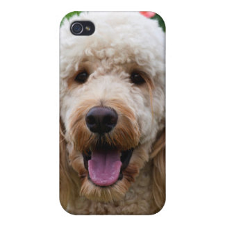 USA, California. Labradoodle Looking At You iPhone 4 Covers