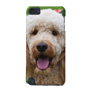 USA, California. Labradoodle Looking At You iPod Touch 5G Covers