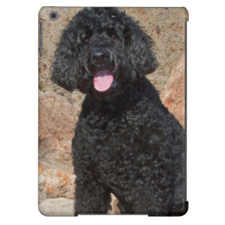 USA, California. Labradoodle Sitting iPad Air Cover