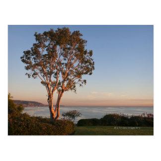 USA, California, Laguna Beach, tree at sunset Postcard