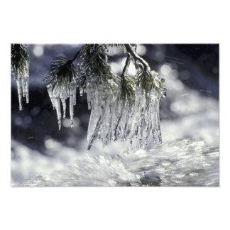 USA, California, Lake Tahoe. Icicles over Photo Art