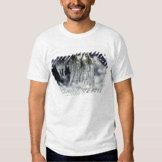 USA, California, Lake Tahoe. Icicles over Shirts