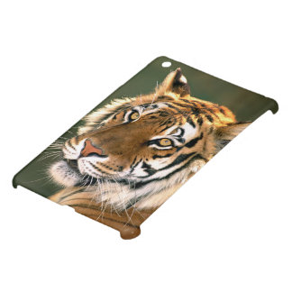 USA, California, Los Angeles County. Portrait 5 iPad Mini Cases
