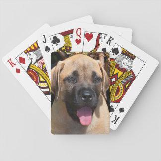 USA, California. Mastiff Puppy Portrait Poker Deck