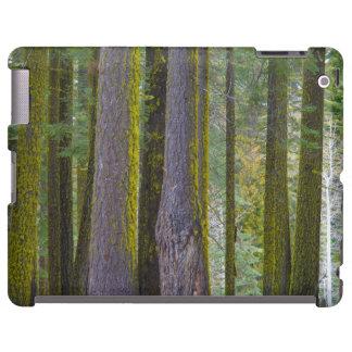 USA, California. Moss Covered Tree Trunks