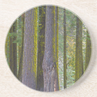 USA, California. Moss Covered Tree Trunks Beverage Coasters