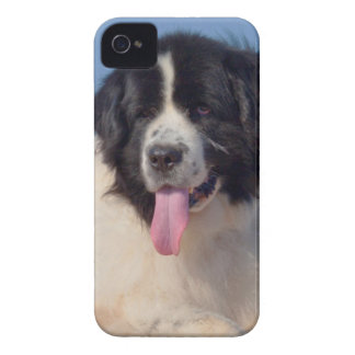 USA, California. Newfoundland Lying In Sand iPhone 4 Case
