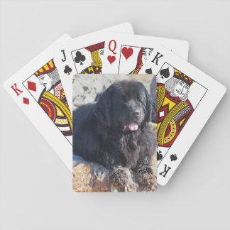 USA, California. Newfoundland Lying Poker Deck